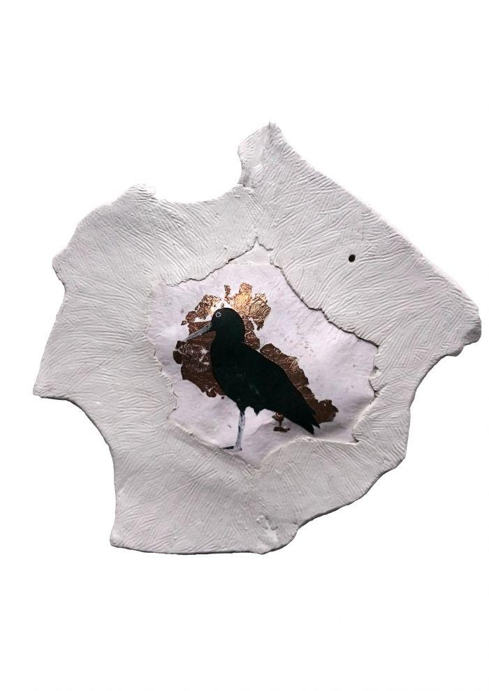 huitrier-des-canaries-33f05a0941a889e4a1d5716fd90c7596