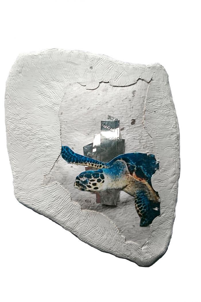 les-dis-tortue-imbriquee-10-5x12-5-2017-ab0c663e51434e0d35d5fe2f6d75963e
