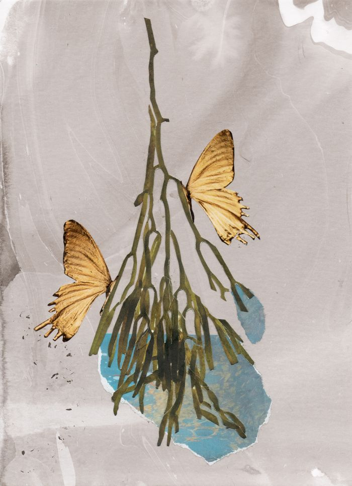 les-joy-les-ailes-15x21-2017-18407eb8c5662349fc157664b6f685f4