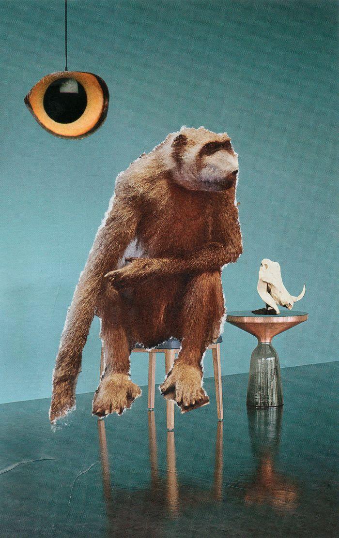 les-maitr-sil-l-oeil-et-le-singe10.1x16-2665c95a141a29ff2c7413cd980c8bb0