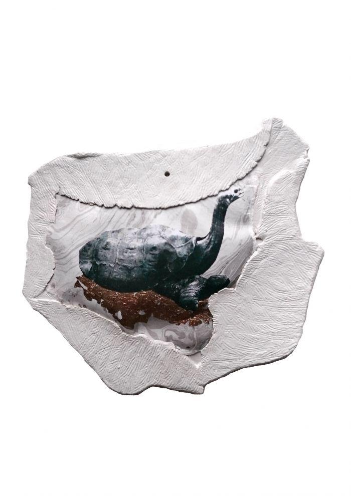 tortue-geante-de-ile-de-pinta-72649c481ffd19a49e94e8a88f48c488