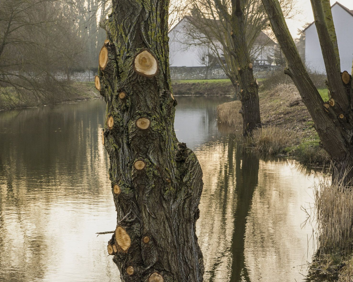 m.dearing-la-01-l-arbre-devant-l-etang-33343bf0ee8a8f0a04723bdfe24c5f68