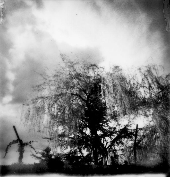 persistances-l-arbre-la-lumiere-100x100-2017-3b449e8bdef2f8eaf9bae870f1a51b91